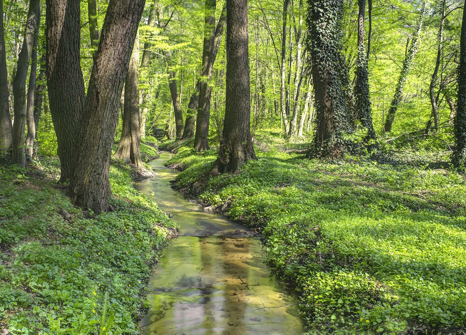 Fotoenter art fotografiaZalesie Dolne Wiosennie