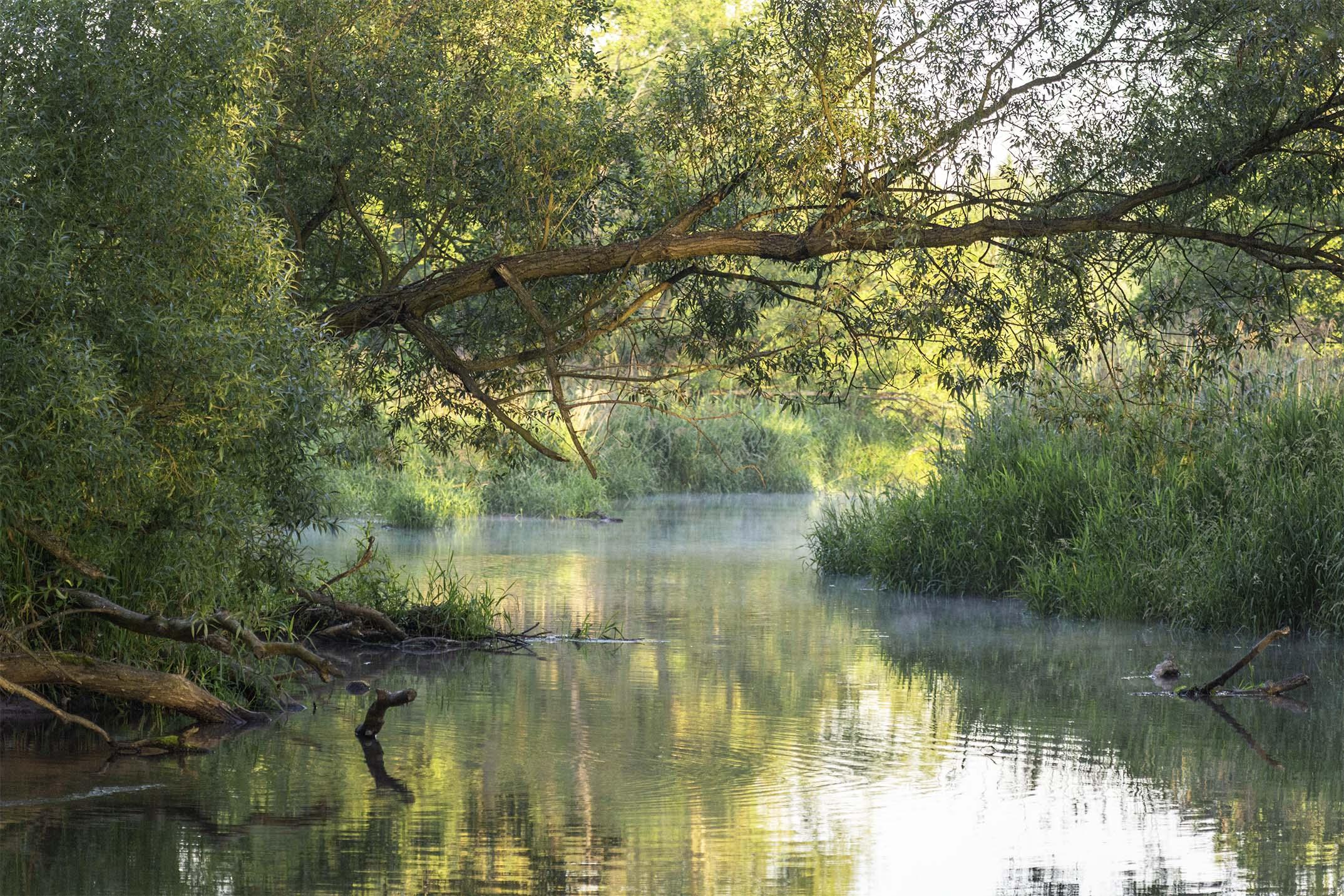 Rzeka Jeziorka Złota godzina czerwiec