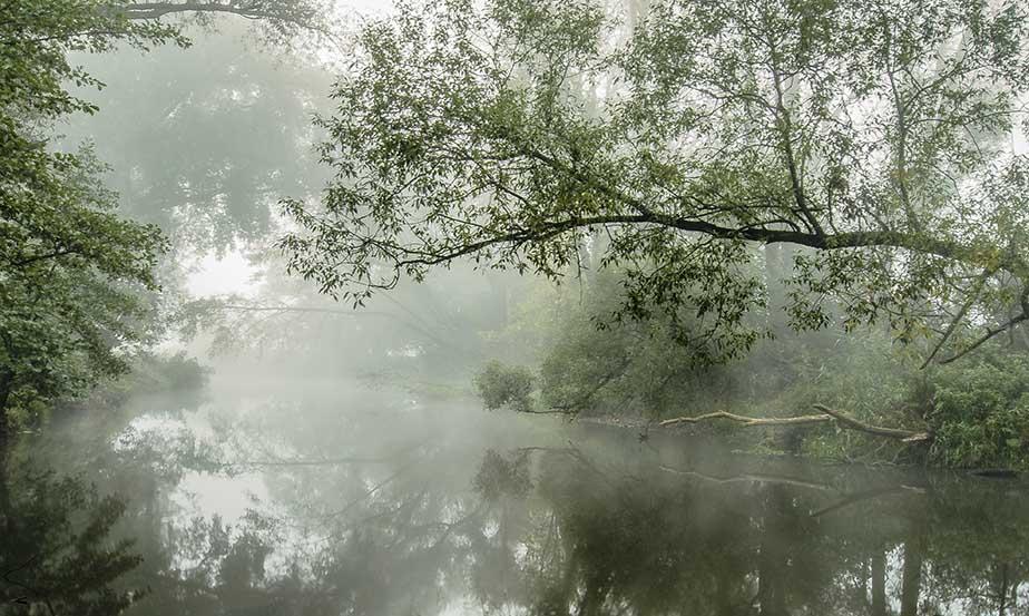 Zielona rzeka we mgle .Jeziorka